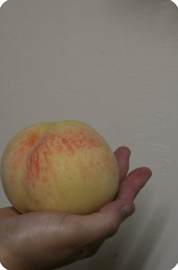 玉島の清水白桃