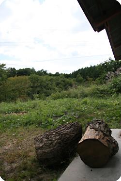 岡山県新見市哲多産の栗の木