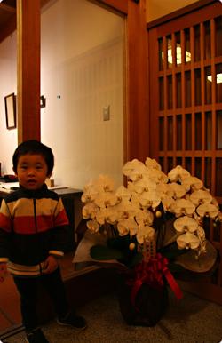 胡蝶蘭と一鴻